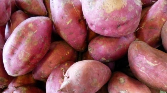 Alimentos para ganhar massa muscular - batata doce