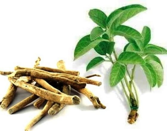 Suplementos para Aumentar a Testosterona Natural - Ashwagandha