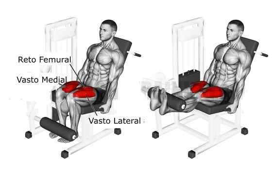 Cadeira extensora músculos