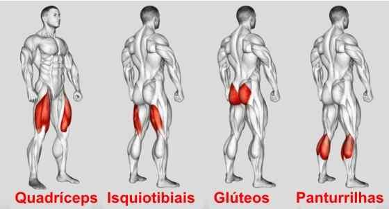 Quais são os músculos envolvidos no agachamento?