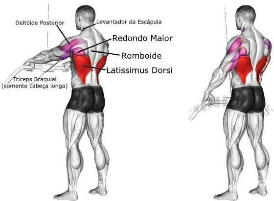 Pull down corda músculos envolvidos