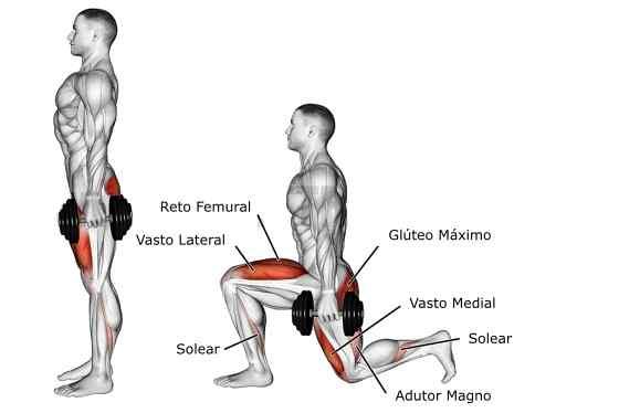 Afundo com halteres Músculos Trabalhados