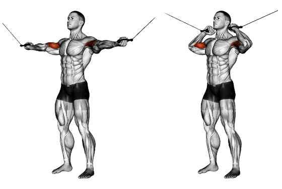 6 exercícios para bíceps