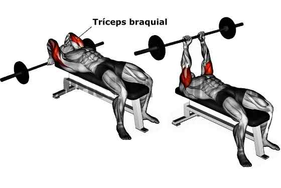 5 Melhores Exercícios para Tríceps