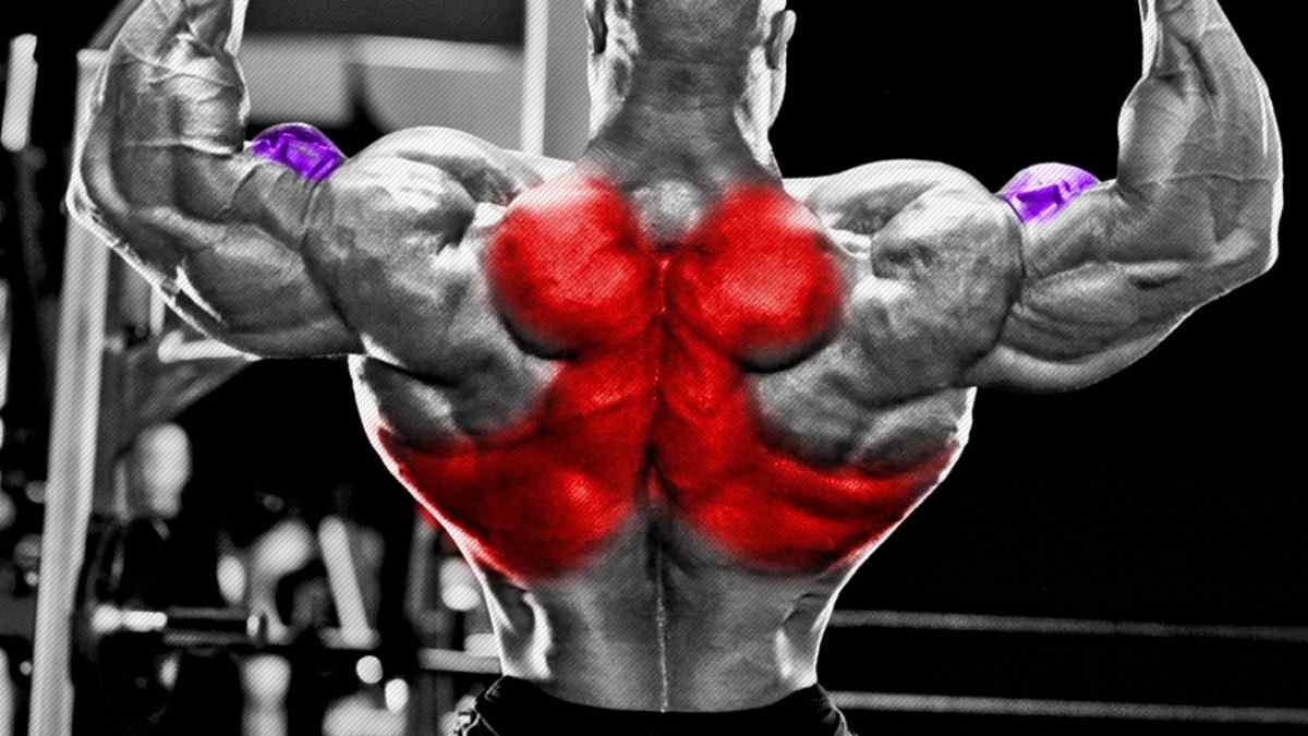 Pode treinar costas e bíceps no mesmo dia?
