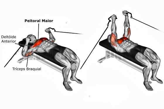 Quais os músculos envolvidos no supino reto?
