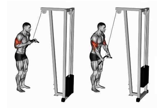 Como fazer Tríceps Pulley